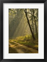 Framed Morning Light, Kanha National Park, India