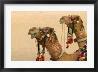 Framed Decorated Camel in the Thar Desert, Jaisalmer, Rajasthan, India