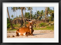 Framed Goa, India. A lazy cow resting on Vagator Beach