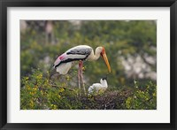 Framed Painted Stork birds, Keoladeo National Park, India