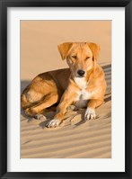 Framed Dog Lying in Sand Dunes, Thar Desert, Jaisalmer, Rajasthan, India