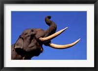 Framed Indian Elephant, Kaziranga National Park, Assam, India