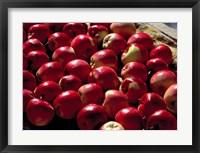 Framed India, Ladakh, Leh. Apples at market in Lamayuru