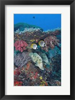 Framed Scene of fish and coral