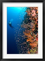 Framed Diver with light next to vertical reef formation, Pantar Island, Indonesia