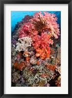 Framed Coral, Raja Ampat, Papua, Indonesia