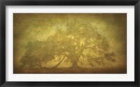 Framed St. Joe Plantation Oak in Fog 3