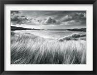 Framed Sea Grass
