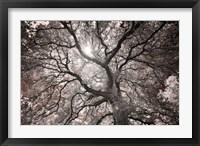 Framed Ethereal Tree