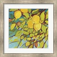 Framed Lemons Above