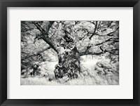 Framed Portrait of a Tree, Study 1