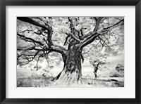 Framed Portrait of a Tree, Study 2