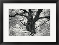 Framed Portrait of a Tree, Study 12