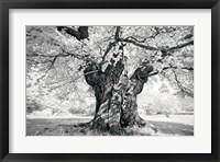 Framed Portrait of a Tree, Study 18