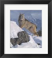 Framed Austere Ascent (Lynx)