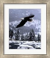 Framed Free Flight (detail)