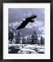 Framed Free Flight (detail)