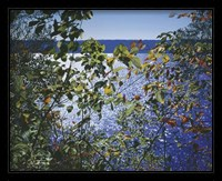 Framed Dark Autumn Leaves