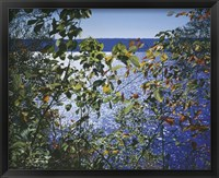 Framed Dark Autumn Leaves