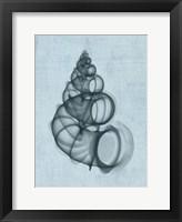Wentletrap Shell (light blue) Framed Print