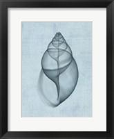 Achatina Shell (light blue) Framed Print