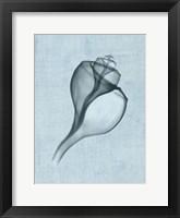 Channelled Whelk (light blue) Framed Print