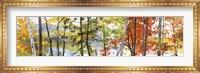 Framed Autumn Lake II