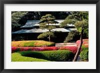 Framed Azaleas at the Imperial Palace East Gardens, Tokyo, Japan