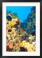 Framed Healthy Reef, Komodo, Indonesia