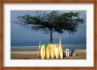 Framed Surfboards Lean Against Lone Tree on Beach in Kuta, Bali, Indonesia