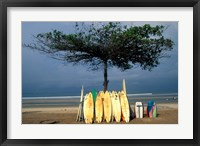 Framed Surfboards Lean Against Lone Tree on Beach in Kuta, Bali, Indonesia
