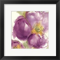 Radiant Poppy II Framed Print