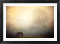 Framed Lone Horse Grazing