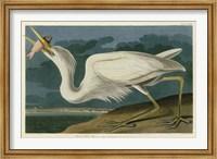 Framed Great White Heron