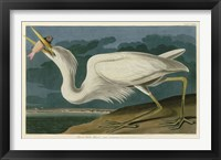 Framed Great White Heron