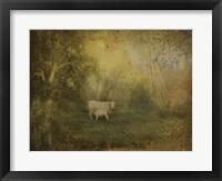 Framed Tendre Charolais
