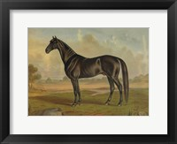 Framed America's Renowned Stallions, c. 1876 II