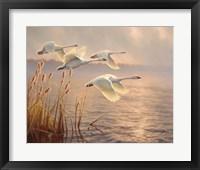 Framed Elegant Migration