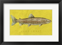 Framed Lake Trout