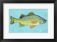 Framed White Perch