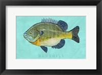 Framed Bluegill