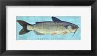 Framed Channel Catfish