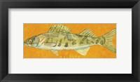 Framed Walleye