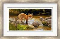 Framed Morning at Honey Creek