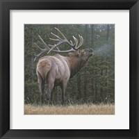 Framed Broken Silence - Elk