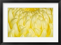 Framed Chrysanthemum Flowers, Ise Shrine, Mie, Japan