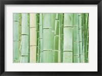 Framed Bambloo Forest, Sagano, Arashiyama, Kyoto, Japan