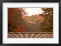 Framed Fall Color around Cable Train Railway, Kyoto, Japan