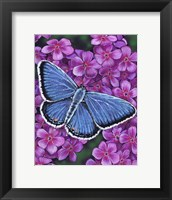 Framed Eastern Tailed Blue Butterfly