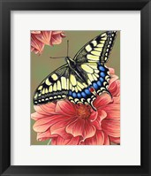Framed Yellow Swallowtail Butterfly